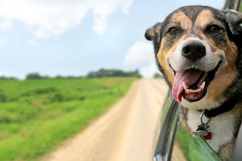 Help Pets Travel Safely During the Holidays