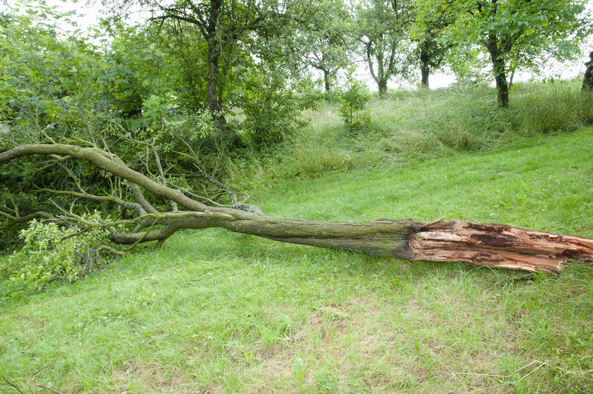 Keep Your Trees and Shrubs Protected From Wind Damage